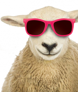 Cool Smiling Sheep resize small